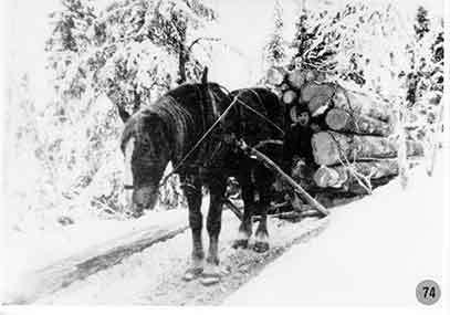 Skogsarbete i Borgafjäll